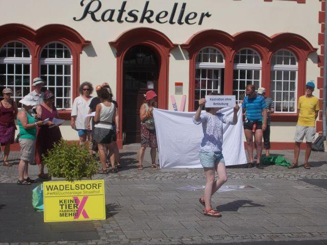 In Vetschau gegen Schweinemast
